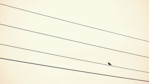 Bird sitting on power supply line