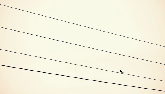 Bird sitting on power supply line, Photo&Coll: Westend61,©gettyimages.com