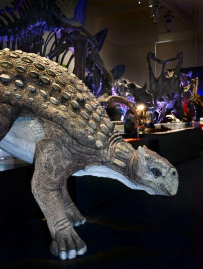 From the Australian Museum's Dinosaurs exhibition: a replica of Minmi paravertebral. Photo: Carl Bento, © Australian Museum