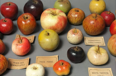 Apple models, Santos Museum of Economic Botany