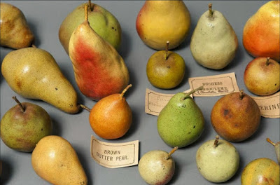Pear models, Santos Museum of Economic Botany