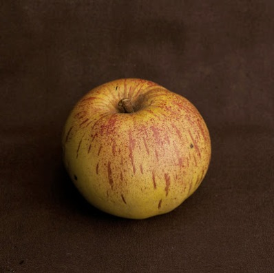 Apple, Gravensteiner, no. 001, iss. 1, 1856, 2nd ed. 1873, from Imitation of life. Photo by Paul Atkins