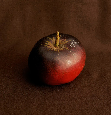 Apple, Schwarzrother, Platter Winter Calvill, no. 176, iss. 62, 1886, from Imitation of life. Photo by Paul Atkins