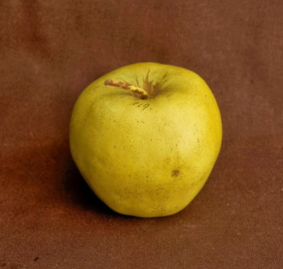 Apple, Apfel au Halder, no. 219, iss. 74, 1897, from Imitation of life. Photo by Paul Atkins