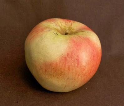 Apple, Bismarck Apefel, no. 221, iss. 74, 1897, in Imitation of life. Photo by Paul Atkins